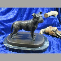 Bronze American Staffordshire terrier